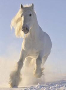 притча про белую лошадь