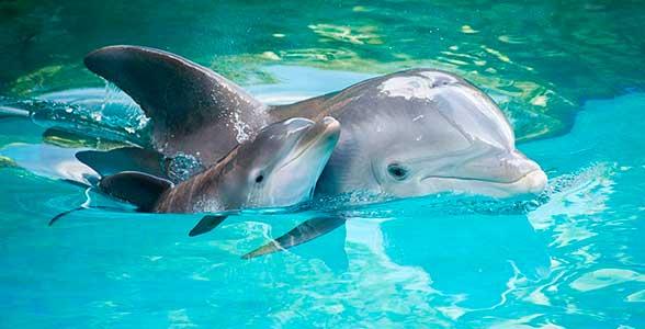 delfin-mama-rebenok