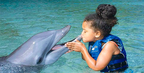 delfiny-love