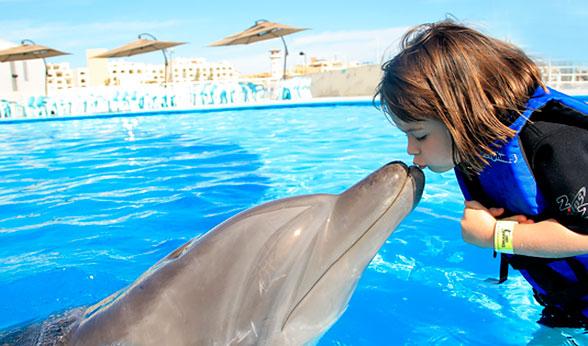 delfiny-love1