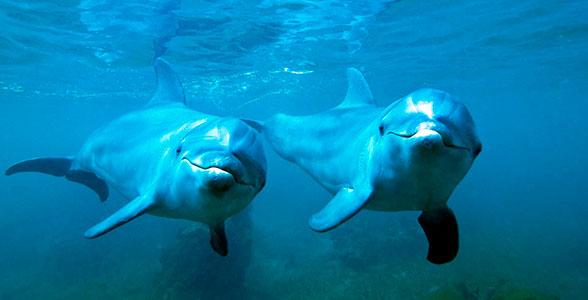 eholokatsiya-delfinov