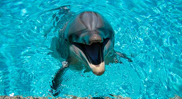 happy-dolphin-in-water