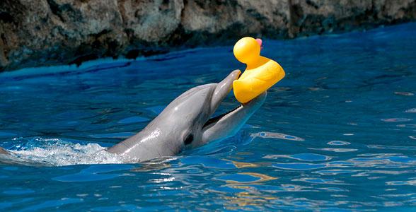 igra-delfina