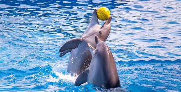 kto-takie-delfiny