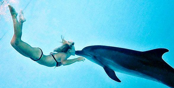 kupanie-s-delfinom