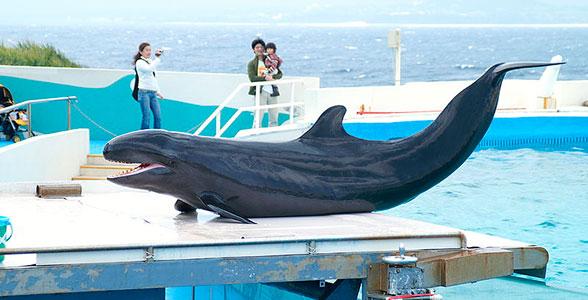tuponosy-delphin