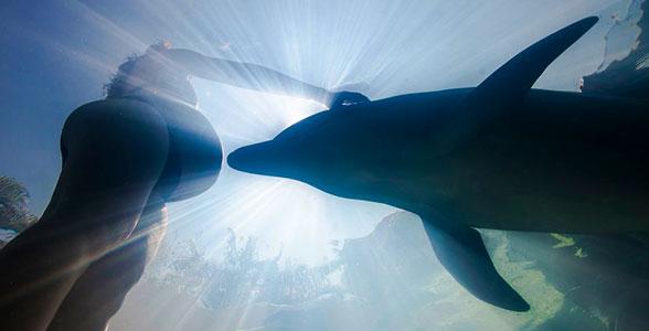 uzi-delfina